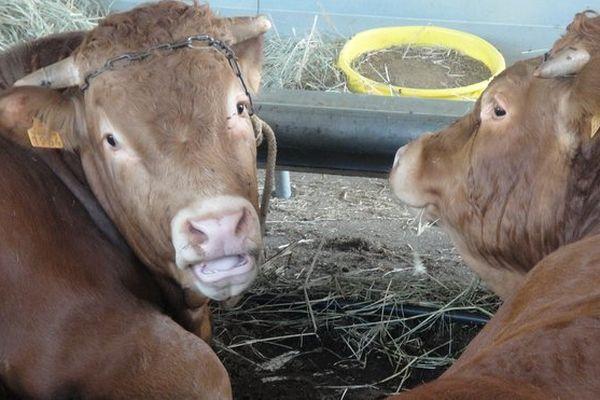 Foire agricole de Bras-Panon