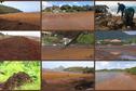 De nouvelles réponses gouvernementales à l'invasion des sargasses sur les côtes antillaises