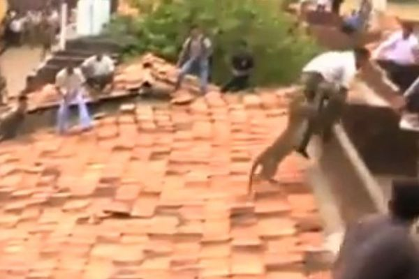 Un léopard sème la panique dans un quartier indien