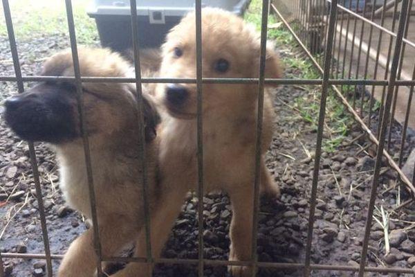 Bébés chiens à la SPA