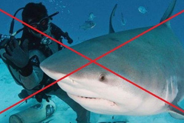 requin erreur