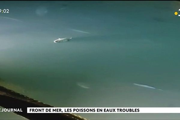 Polémique autour du parc à poisson de Papeete
