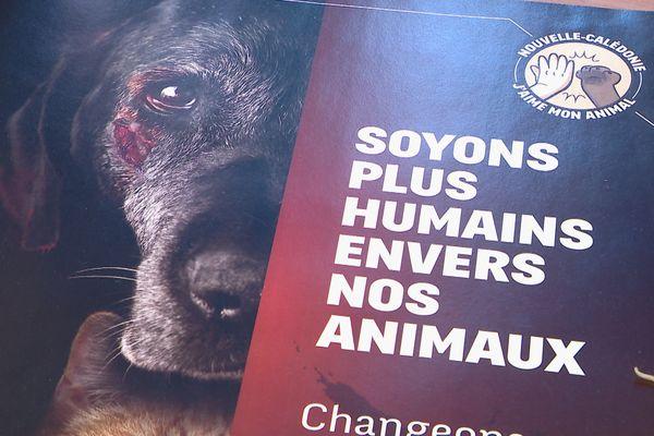 les violences animales en augmentation
