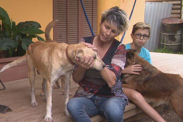 famille accueil chien