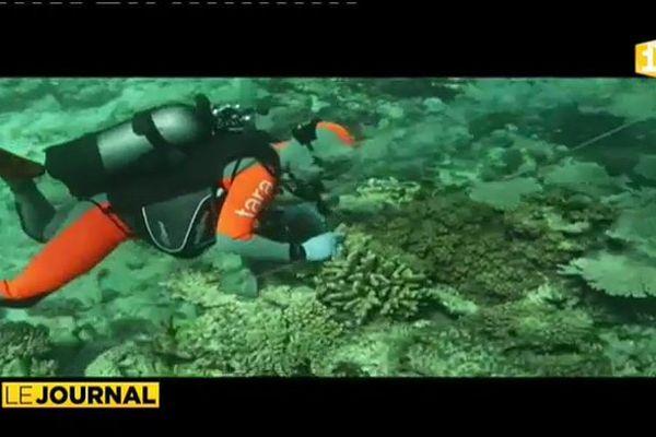 La goélette scientifique Tara au chevet des coraux