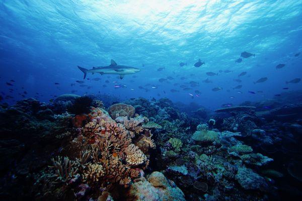 Surveillance des récifs coralliens classés