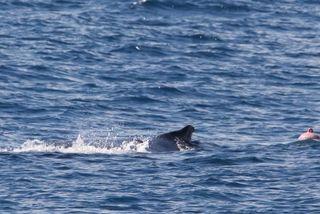 baleine accrochée à une balise de pêche