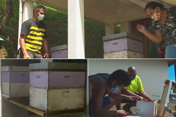 l'apiculture pour sortir de l'ornière