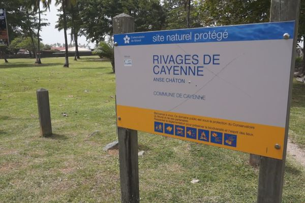 Rivages de Guyane, anse Châton à Cayenne