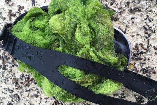 algues deva bourail