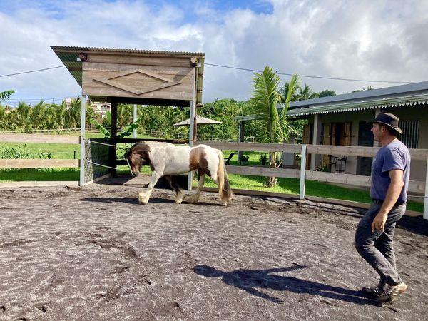 Stephane Hoareau et son cheval gypsy