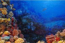 L'eau sera extirpée à près de 1 000 mètres de profondeur.