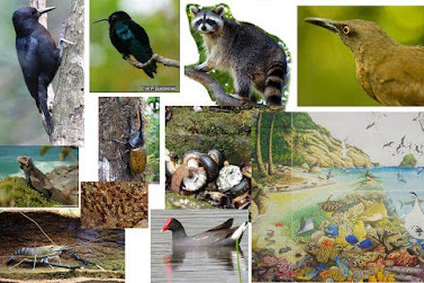 Biodiversité animal de la Guadeloupe