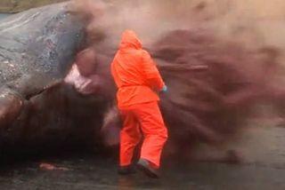 Explosion baleine