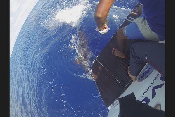 L'Open Blue Marlin