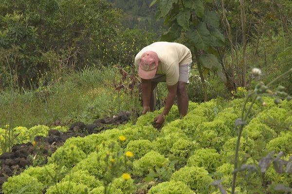 Mafate Jean-Pierre Thomas agriculteur à Aurère 230921
