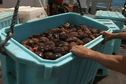 La grogne des pêcheurs artisans sur le quota de concombre de mer