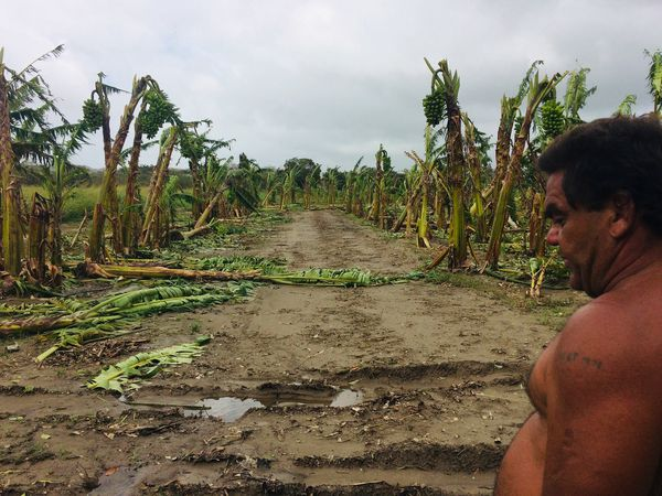 Ouégoa après Oma, Joël Carnicelli face à sa bananeraie dévastée, 21 février 2019