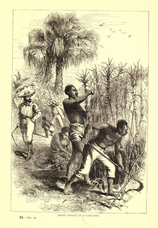 Des esclaves travaillent dans une plantation (aux Etats-Unis) sous la surveillance de deux contremaîtres armés de fouets.Des esclaves travaillent dans une plantation (aux Etats-Unis) sous la surveillance de deux contremaîtres armés de fouets.