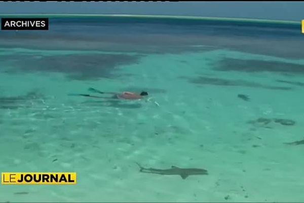 Mieux connaître les requins