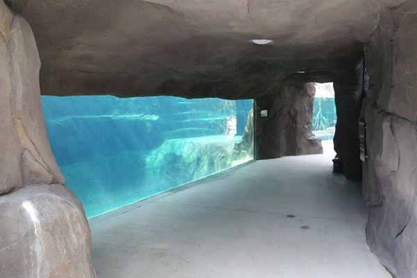 Le bassin du lamantin