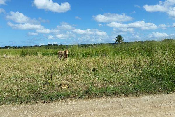Le ministère de l'agriculture publie un rapport sévère sur la Safer Guadeloupe