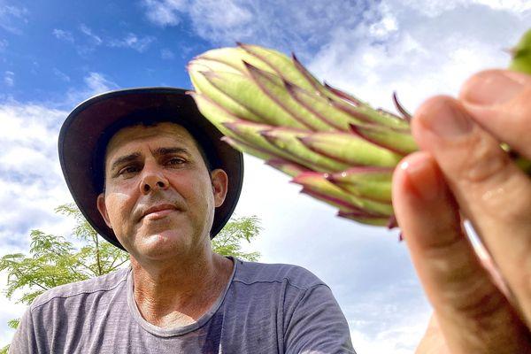 Stéphane Hoareau, l'un des plus gros producteurs de pitayas de La Réunion