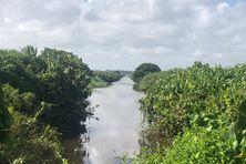 Canal dans la savane inondée de Mana