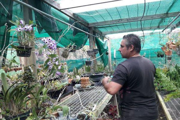 Plantes Foire Koumac