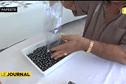 Le GIE Poe o Rikitea organise sa 8ème vente aux enchères internationale de perles de Tahiti.