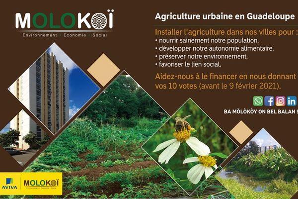 Le projet Molokoï - concours national Aviva