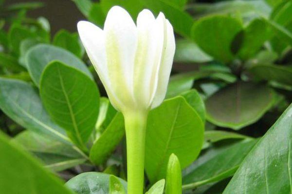 Ouverture des 7e Floralies à Faaa
