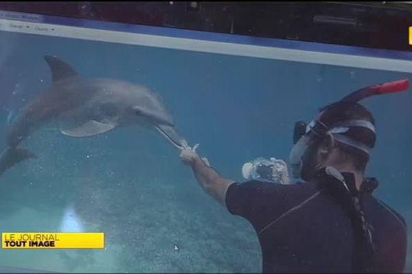 Eric Demay, l'homme qui parlait aux dauphins
