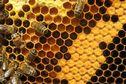Après 6 mois de formation, ils sont apiculteurs