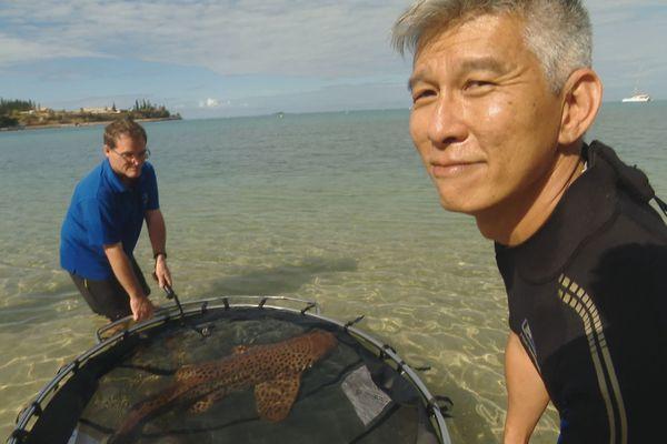 Relâché de requin léopard adulte, baie des Citrons, 11 octobre 2019