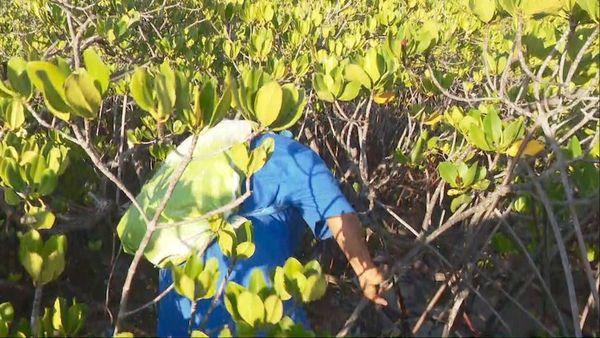 Mangrove de Oundjo, Voh, pêcheuse de crabe 1er février 2020