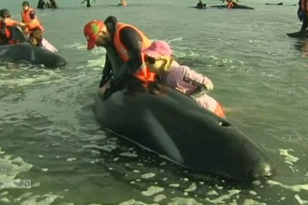 Baleines nouvelle Zélande