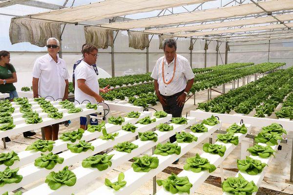 Produire des fruits et légumes toute l'année, c'est possible à Taravao