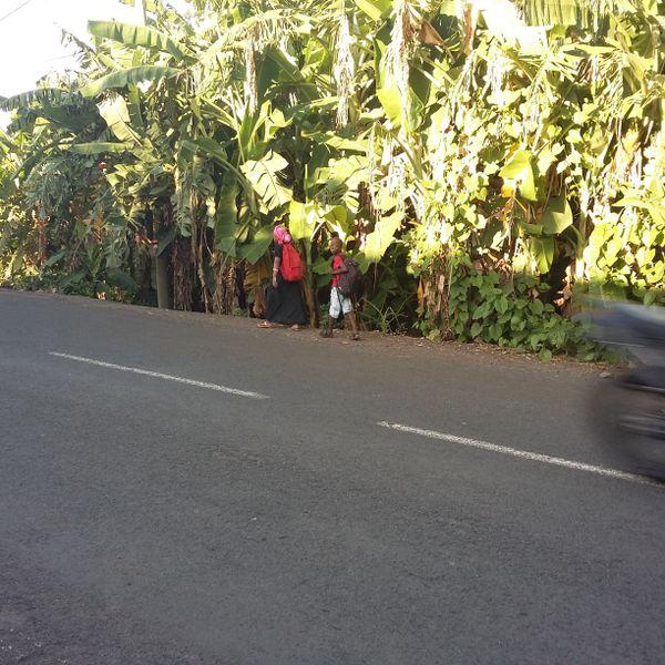 écoliers sur la route