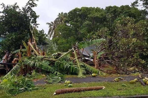 Bananiers Tombes Lifou cyclone Cook (10 avril 2017)