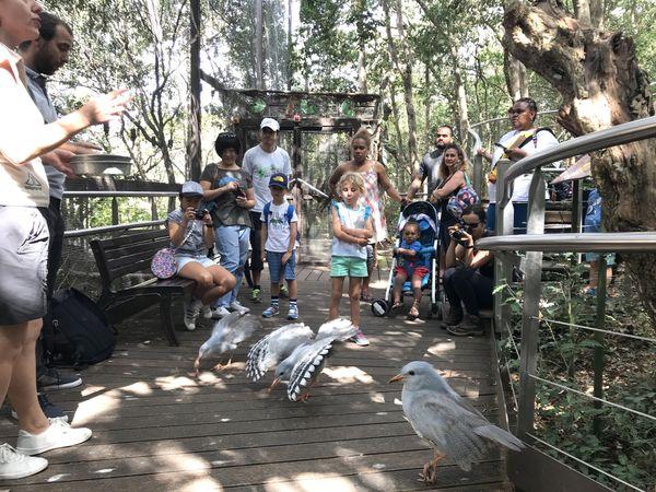 L'APS au parc forestier