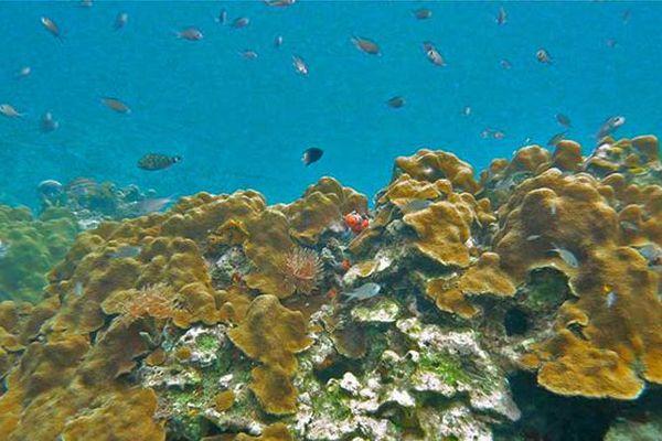 coraux guadeloupe