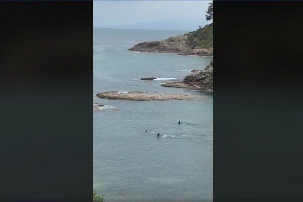 Des orques NZ