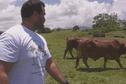 Des taureaux de Nouvelle-Calédonie pour un meilleur élevage