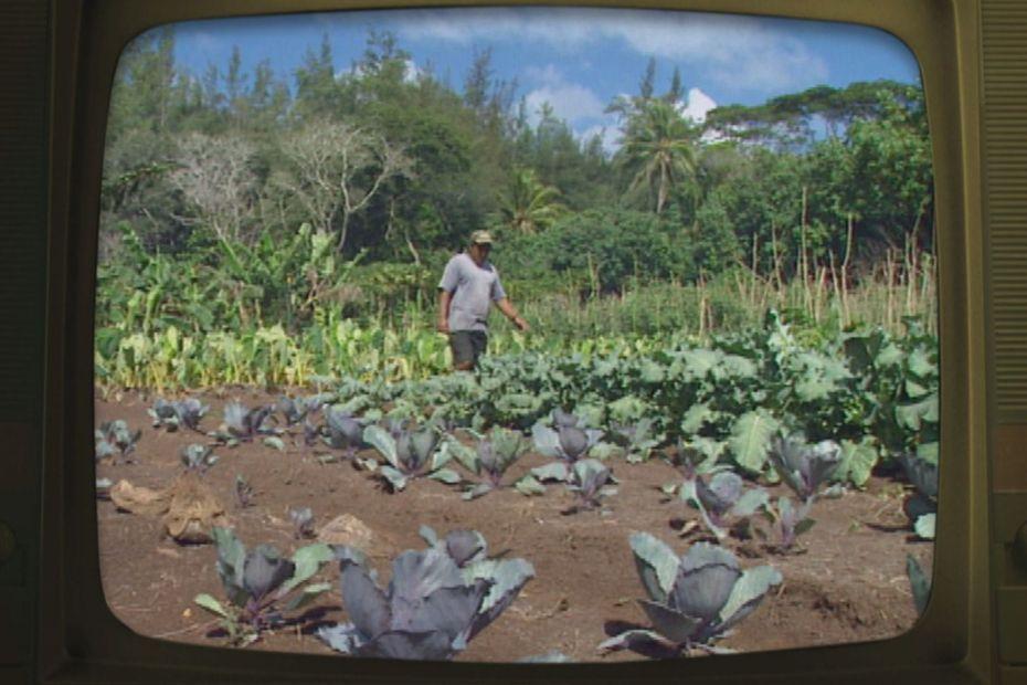 Fenua d'avant : l'agriculture à Mangareva après le C.E.P Mangareva - Polynésie la 1ère