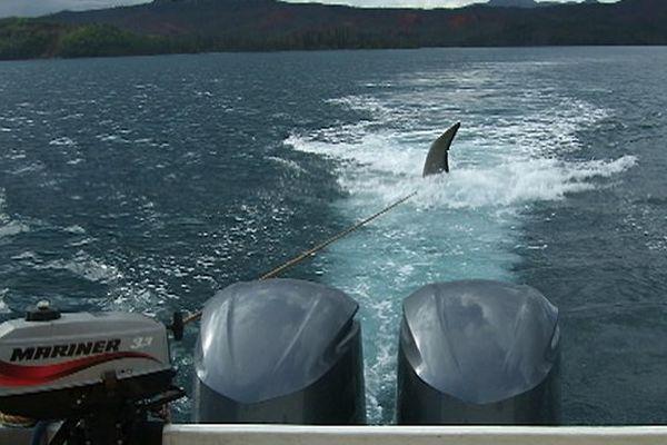 tentative déséchouage des baleines