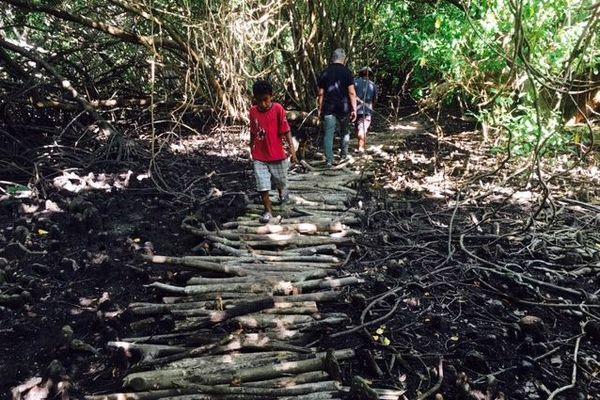 Sentier mangrove touho