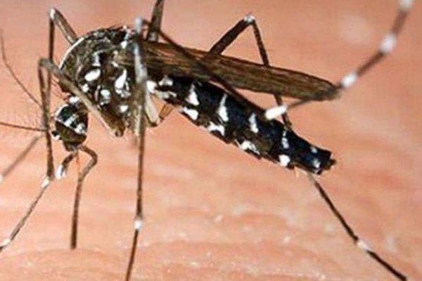8e décès lié à la dengue en Nouvelle Calédonie depuis le début de l'épidémie