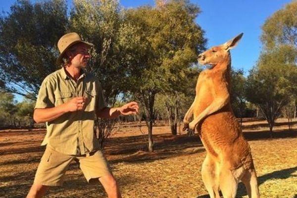 Roger, kangourou bodybuildé, la coqueluche des médias