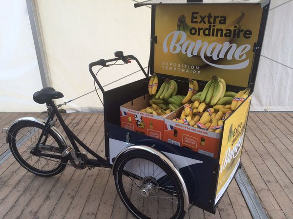 La banane des Antilles, star de Dunkerque